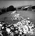 בית-זרע 1939 - סלילת הכביש הפנימי לקבוץ - iוינטרשטייןi btm11413.jpeg
