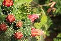 פרחים בישראל (161).JPG