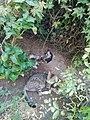 قطة مع صغارها.jpg