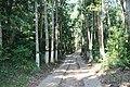 লাউয়াছড়া জাতীয় উদ্যান 01.jpg