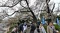 井の頭公園 - panoramio (47).jpg