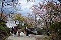 吉野山 上千本 Kami-sembon in Yoshinoyama 2013.4.09 - panoramio.jpg