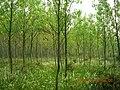 含山县含城西郊小树林景色 - panoramio.jpg