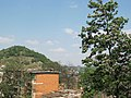 大树 - panoramio (1).jpg