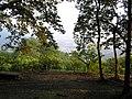 宝登山山頂から - panoramio.jpg