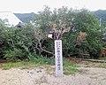 小部のハマボウ群生 - panoramio.jpg