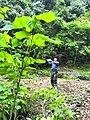 新丰芹菜塘林场越野穿越20150411 - panoramio (16).jpg