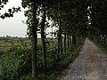 油坊庄温泉养殖场向北的林荫公路 - panoramio.jpg