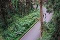 溪頭林道 Xitou Forest Road - panoramio.jpg