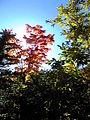 竜頭の滝‐紅葉2 - panoramio.jpg
