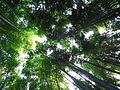 竹やぶ (5089042700).jpg