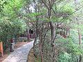 蛇岛上的小路 - panoramio (1).jpg