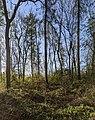 -2021-04-22 Tall trees, Bourne, Lincolnshire.jpg