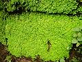04566jfPulilan Butterfly Gardens Moss Larvae Bulacanfvf 29.JPG