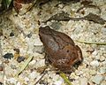 071118 frog ID - Flickr - Lip Kee.jpg