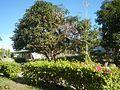 09556jfAlexis G. Santos National High School Liciada, Bustos Bulacanfvf 30.jpg
