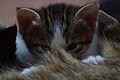 1-month-old kittens 17.jpg