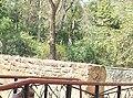 100 2445Сакський курортний парк.jpg