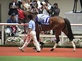 11 Gentildonna (June 23, 2013. 54th Takarazuka Kinen) (9115306003).jpg