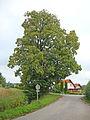 1254 Winterlinde 2.JPG