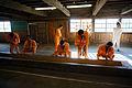 130713 Abashiri Prison Museum Abashiri Hokkaido Japan46s3.jpg