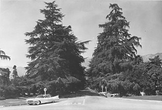 Christmas Tree Lane - Intersection at Woodbury Road in 1959.