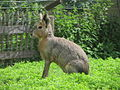 20120802 Zoo Zonnegloed (31).JPG