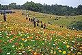 2014-04-04 石象湖 郁金香 liuzusai - panoramio (76).jpg