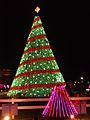 2014 National Christmas Tree.jpg
