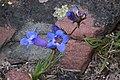 2015.06.27 14.22.58 IMG 2852 - Flickr - andrey zharkikh.jpg