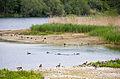 2015 05 24 Deutschland Baden-Württemberg Landkreis Sigmaringen Naturschutzgebiet Zielfinger Vogelsee (17).jpg