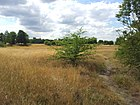 2015 London, Woolwich Common 11