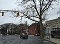 2016-02-23 12 51 00 A large street tree at the intersection of North Clinton Avenue and East State Street (Mercer County Route 635) in the Ewing-Carroll section of Trenton, New Jersey.jpg