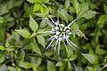 2016 Singapur, Ogrody botaniczne (193).jpg