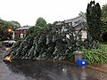 2018-05-14 19 05 15 An uprooted tree after a severe thunderstorm on Allness Lane in the Franklin Farm section of Oak Hill, Fairfax County, Virginia.jpg