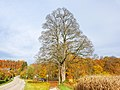 20201102 ND Ahorn beim Schloss Winh.jpg