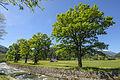 6 Eichen an Melach Gemeinde Unterperfuss.jpg
