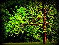 8a Forest Texture FG2 (7533521844).jpg