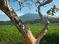 9368Santo Niño Turu Magalang Pampanga Landmarks 36.jpg