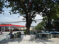 9757jfSyzygium cumini Santa Trinidad Angeles Cityfvf 04.JPG