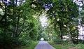 A Road at Pitgaveny - geograph.org.uk - 1368902.jpg