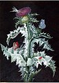 A Study of a Thistle by Barbara Regina Dietzsch, watercolor.jpg