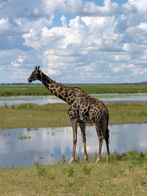 A photo of Botswana