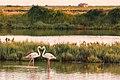 A heart of flamingos.jpg