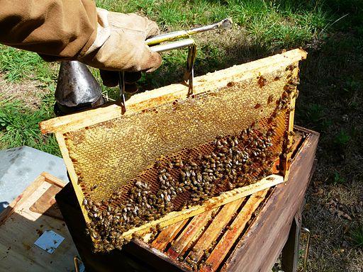 Abeilles et ruches 06