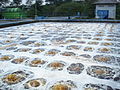 Aerated pool for waste water treatment.JPG