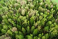 Aerial view of a forest 1 (Unsplash).jpg