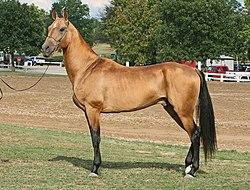 Price F Golden Retrievers Pocatelloor Elk Antler Ring