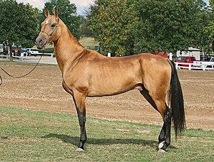 Восточная лошадь