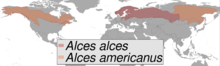 Alces sp. distribution (gray).png